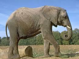 Картинки по запросу очень смешные картинки с слон