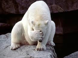 Картинки по запросу очень смешные картинки с медведь