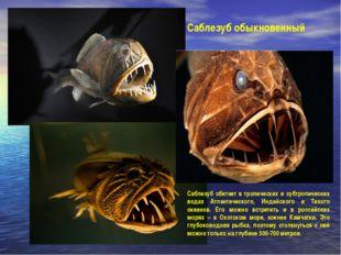 Саблезуб обыкновенный Саблезуб обитает в тропических и субтропических водах А