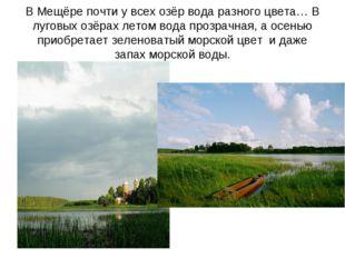 В Мещёре почти у всех озёр вода разного цвета… В луговых озёрах летом вода пр