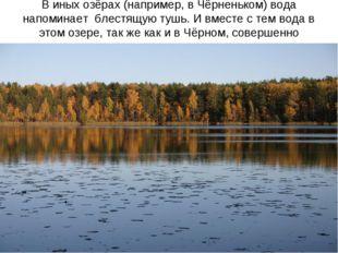 В иных озёрах (например, в Чёрненьком) вода напоминает блестящую тушь. И вмес
