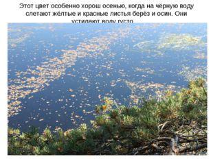 Этот цвет особенно хорош осенью, когда на чёрную воду слетают жёлтые и красны