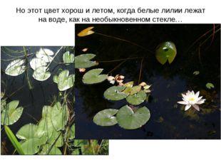 Но этот цвет хорош и летом, когда белые лилии лежат на воде, как на необыкнов