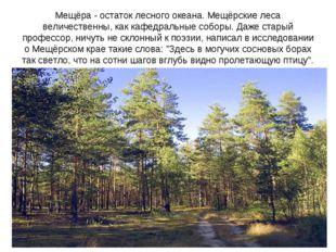 Мещёра - остаток лесного океана. Мещёрские леса величественны, как кафедральн