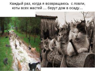 Каждый раз, когда я возвращаюсь с ловли, коты всех мастей … берут дом в осаду…