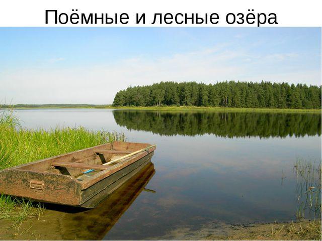 Поёмные и лесные озёра