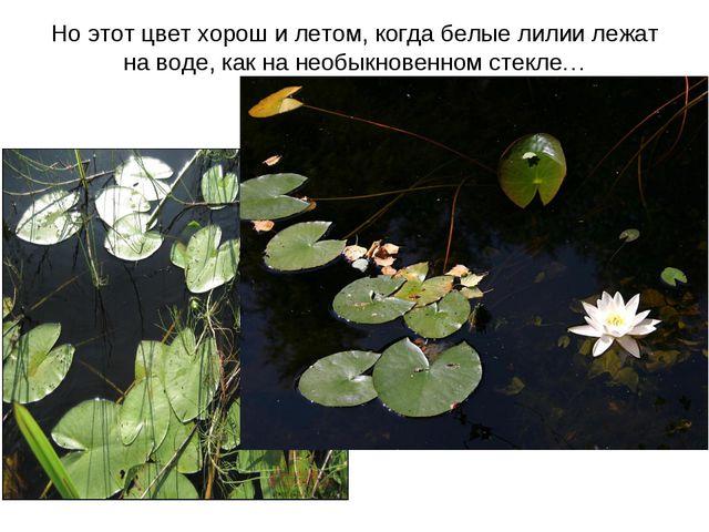 Но этот цвет хорош и летом, когда белые лилии лежат на воде, как на необыкнов...