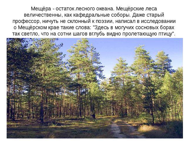 Мещёра - остаток лесного океана. Мещёрские леса величественны, как кафедральн...