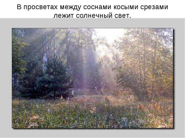 В просветах между соснами косыми срезами лежит солнечный свет.