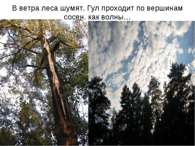 В ветра леса шумят. Гул проходит по вершинам сосен, как волны…