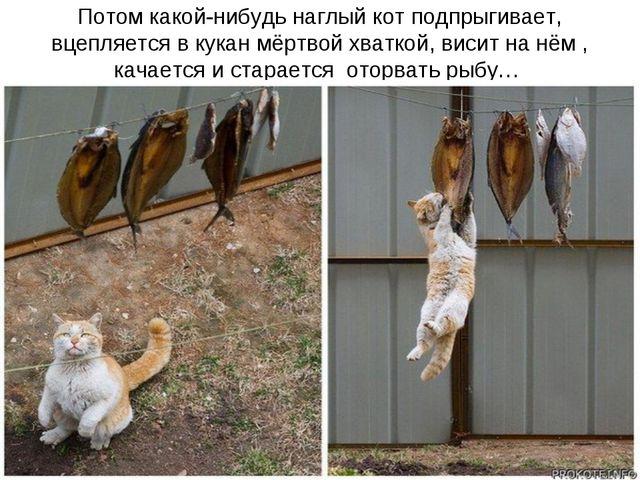 Потом какой-нибудь наглый кот подпрыгивает, вцепляется в кукан мёртвой хватко...