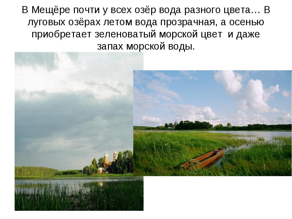 В Мещёре почти у всех озёр вода разного цвета… В луговых озёрах летом вода пр...