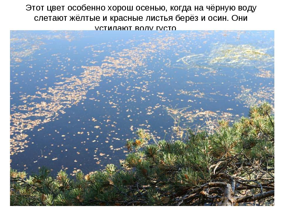 Этот цвет особенно хорош осенью, когда на чёрную воду слетают жёлтые и красны...
