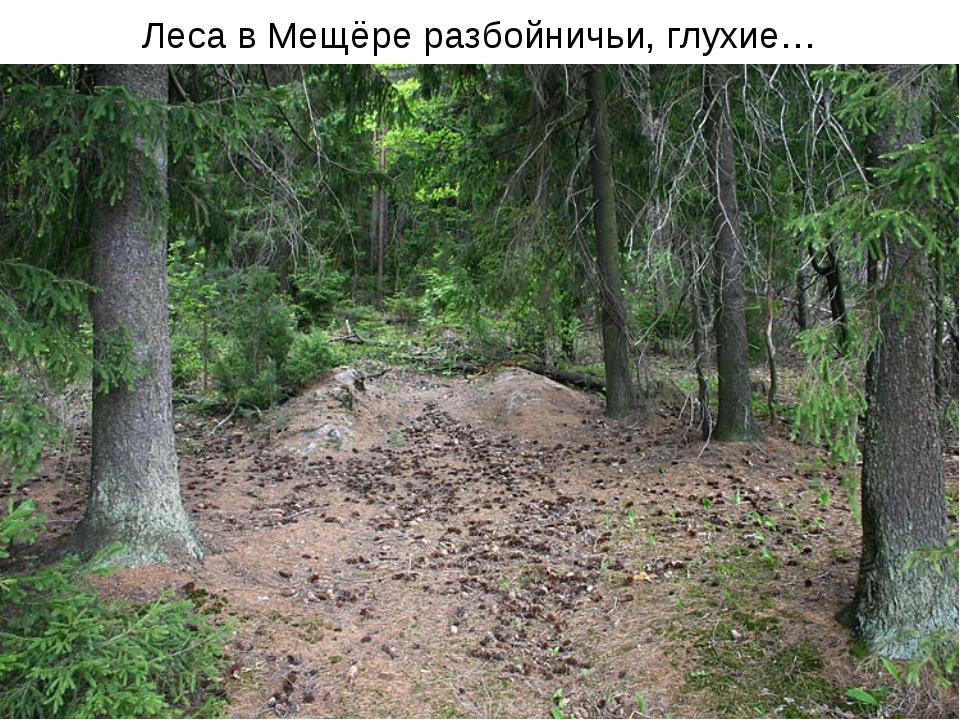 Леса в Мещёре разбойничьи, глухие…