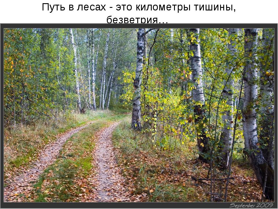 Путь в лесах - это километры тишины, безветрия…