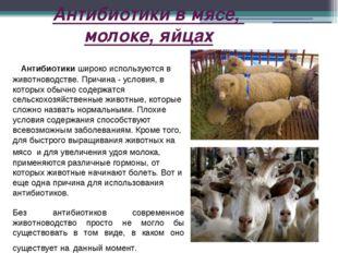 Антибиотики в мясе, молоке, яйцах Антибиотики широко используются в животново