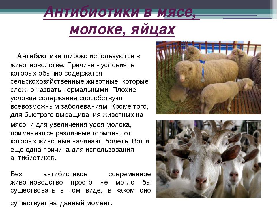 Антибиотики в мясе, молоке, яйцах Антибиотики широко используются в животново...
