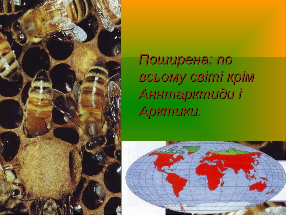 Поширена: по всьому світі крім Аннтарктиди і Арктики.
