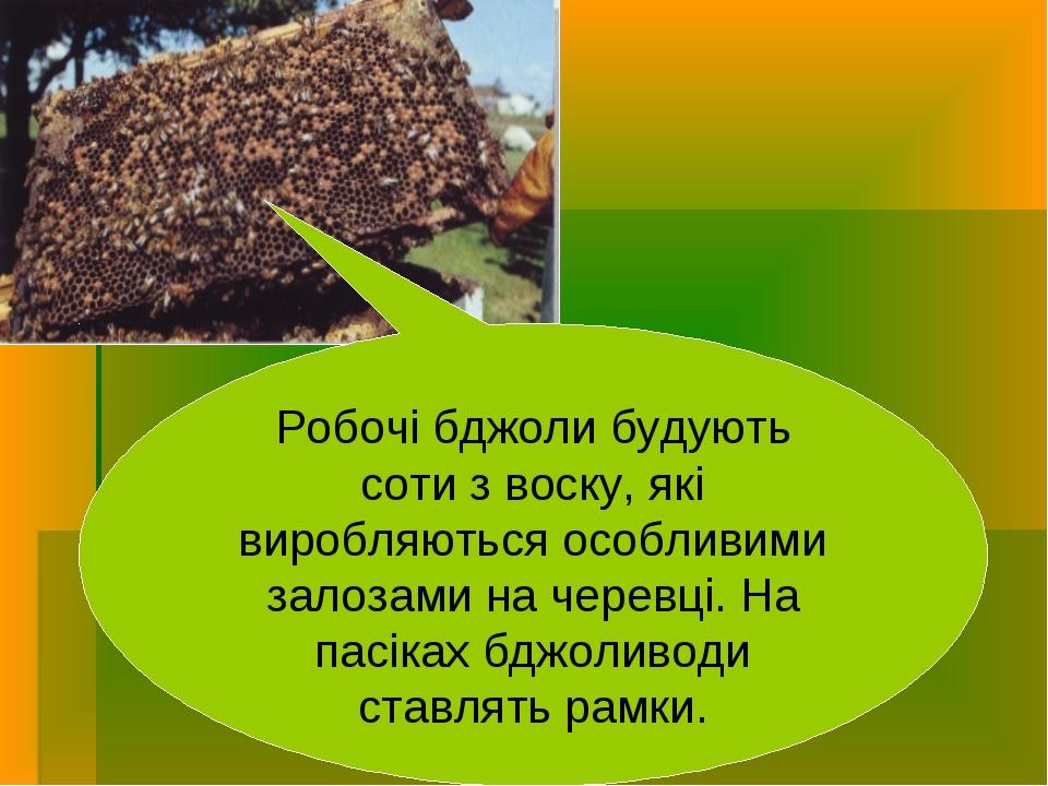 Робочі бджоли будують соти з воску, які виробляються особливими залозами на ч...