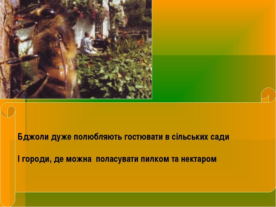 Бджоли дуже полюбляють гостювати в сільських сади І городи, де можна поласува...