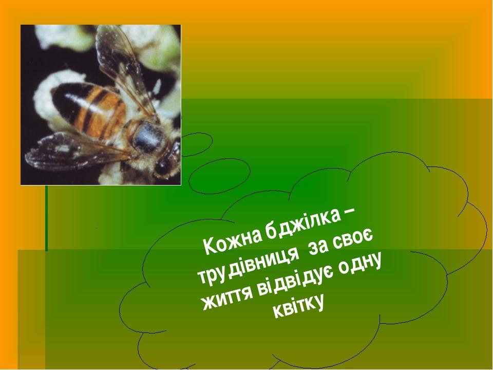 Кожна бджілка – трудівниця за своє життя відвідує одну квітку