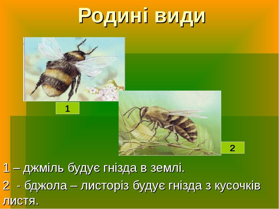 Родині види 1 – джміль будує гнізда в землі. 2 - бджола – листоріз будує гніз...