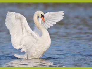 Существует настоящее «чудо», связанное с павлином,— это его нетленность. Мяс