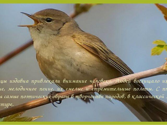 Птицы издавна привлекали внимание человека. Людей восхищало их яркое оперение...