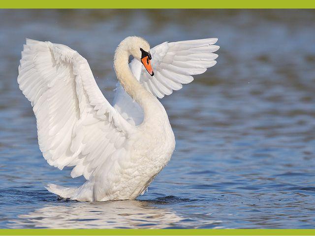 Существует настоящее «чудо», связанное с павлином,— это его нетленность. Мяс...