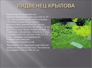 Редкий вид. Поликарпическая короткокорневищная трава высотой 10–30 см, с восх