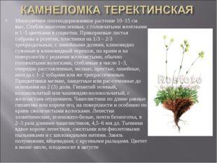 Многолетнее плотнодерновинное растение 10–15 см выс. Стебли многочисленные, с