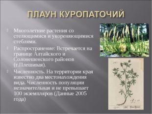 Многолетние растения со стелющимися и укореняющимися стеблями. Распространени