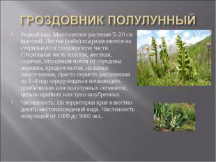 Редкий вид. Многолетнее растение 5–20 см высотой. Листья (вайи) подразделяютс