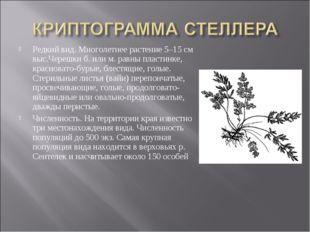 Редкий вид. Многолетнее растение 5–15 см выс.Черешки б. или м. равны пластинк