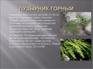 Редкий вид. Многолетнее растение 10–40 см высотой. Корневище тонкое, ползучее
