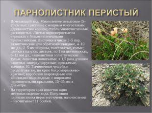 Исчезающий вид. Многолетнее невысокое (5–20 см выс.) растение с мощным многог