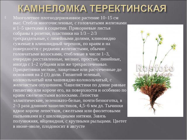 Многолетнее плотнодерновинное растение 10–15 см выс. Стебли многочисленные, с...
