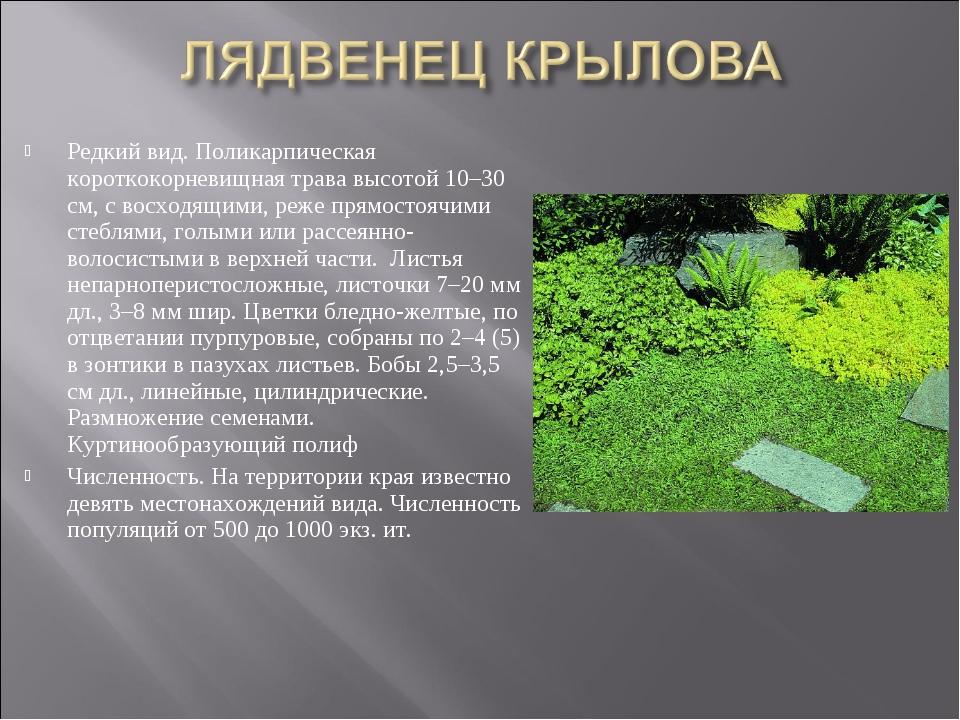 Редкий вид. Поликарпическая короткокорневищная трава высотой 10–30 см, с восх...