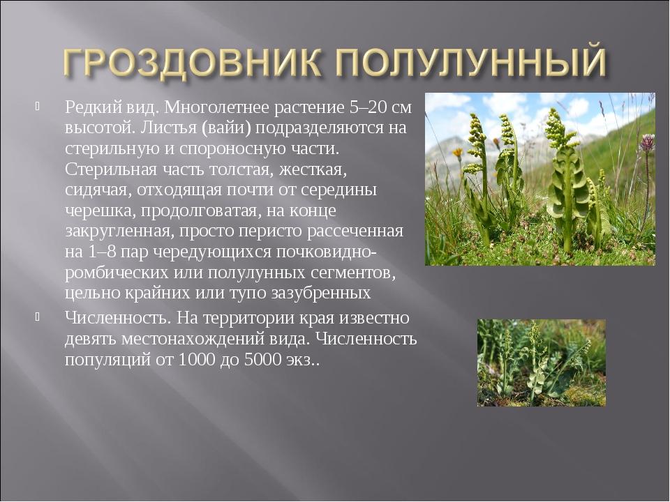 Редкий вид. Многолетнее растение 5–20 см высотой. Листья (вайи) подразделяютс...