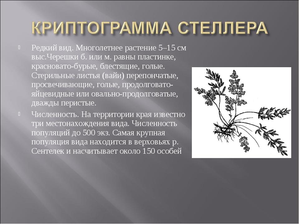 Редкий вид. Многолетнее растение 5–15 см выс.Черешки б. или м. равны пластинк...