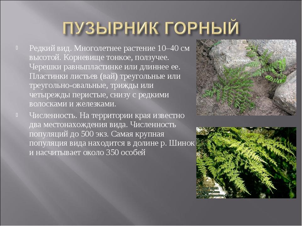 Редкий вид. Многолетнее растение 10–40 см высотой. Корневище тонкое, ползучее...