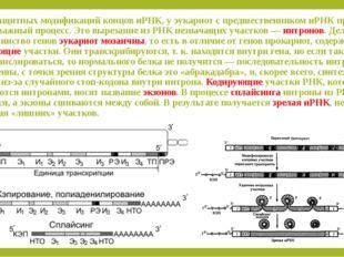Помимо защитных модификаций концов иРНК, у эукариот с предшественником иРНК п