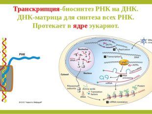 Транскрипция-биосинтез РНК на ДНК. ДНК-матрица для синтеза всех РНК. Протекае