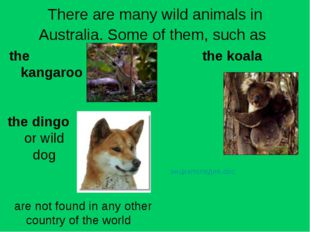 There are many wild animals in Australia. Some of them, such as the kangaroo
