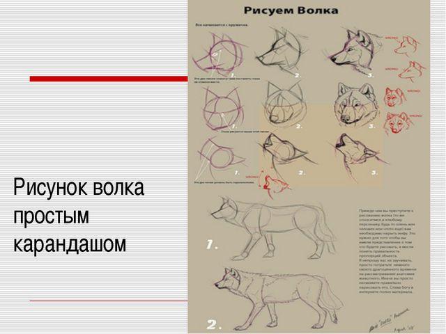 Рисунок волка простым карандашом