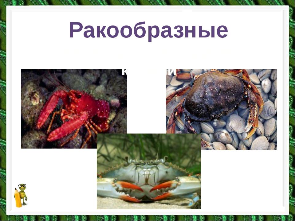 Ракообразные Тело покрыто панцирем, 2 клешни