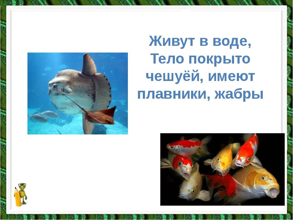 Рыбы Живут в воде, Тело покрыто чешуёй, имеют плавники, жабры