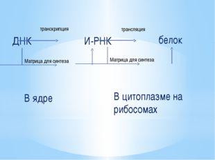 ДНК транскрипция И-РНК трансляция белок Матрица для синтеза Матрица для синте