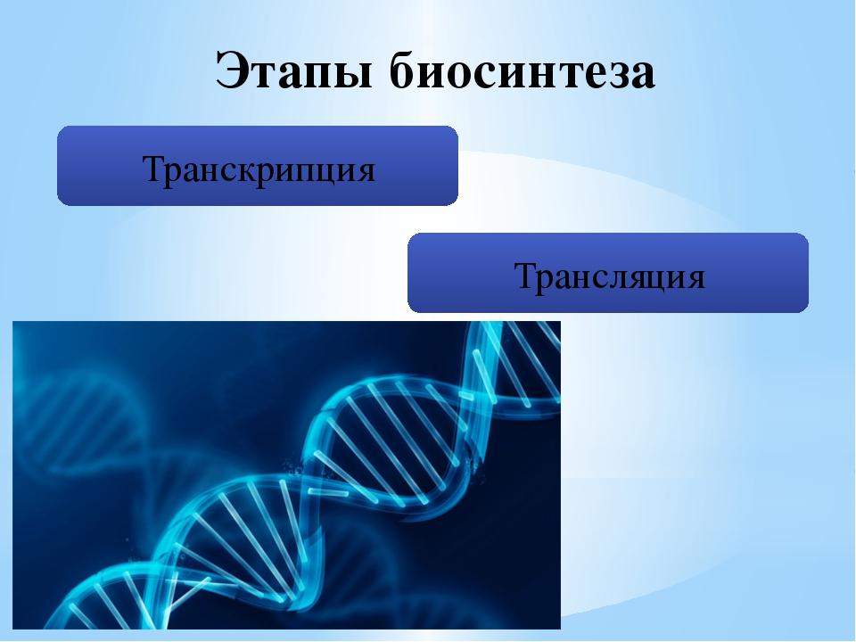 Этапы биосинтеза Транскрипция Трансляция