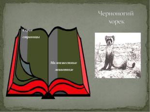 Серые страницы Малоизвестные животные